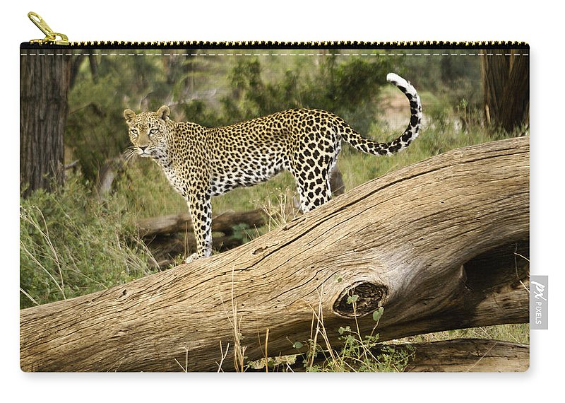 Africa Carry-all Pouch featuring the photograph Leopard In The Forest by Michele Burgess