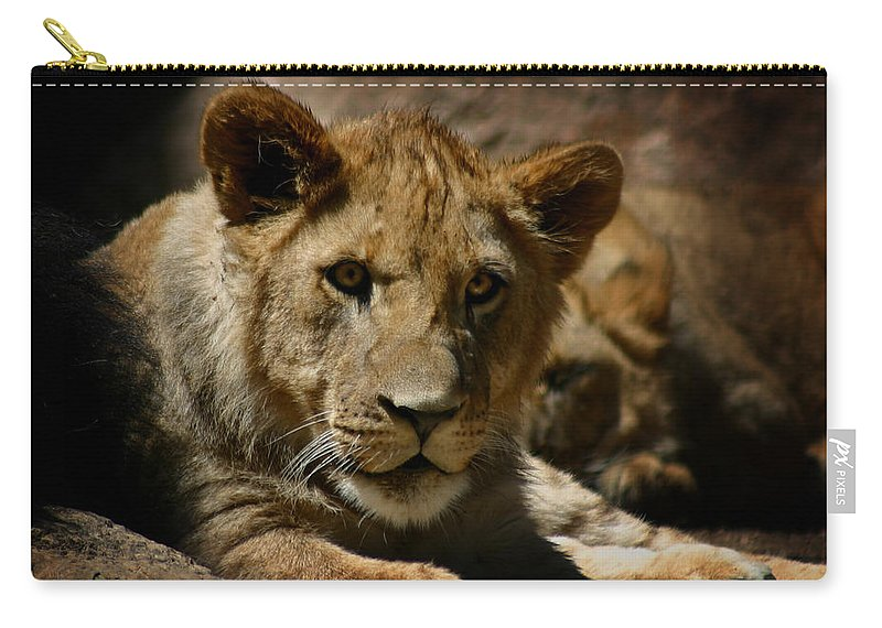 Lion Carry-all Pouch featuring the photograph Lion Cub by Anthony Jones