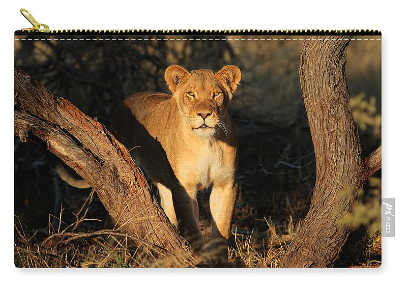 Lion Carry-all Pouch featuring the digital art Lion by Dorothy Binder