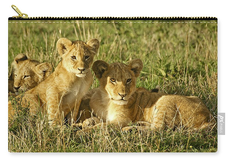 Lion Carry-all Pouch featuring the photograph Little Lions by Michele Burgess