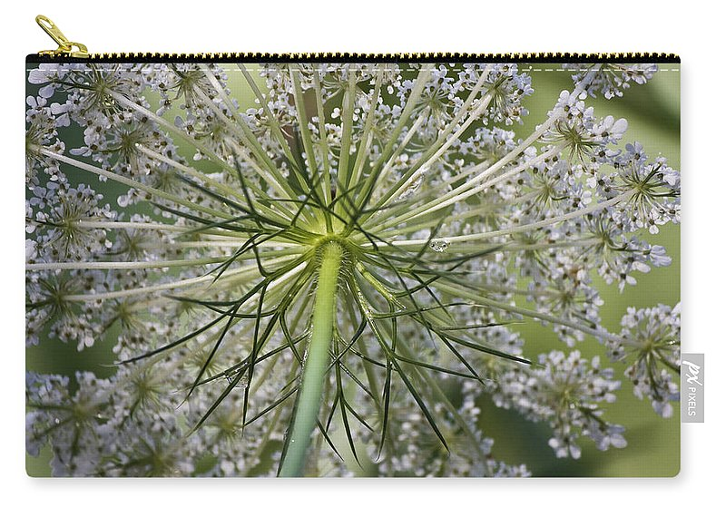 Queen Anne's Lace Carry-all Pouch featuring the photograph Look Up by Teresa Mucha