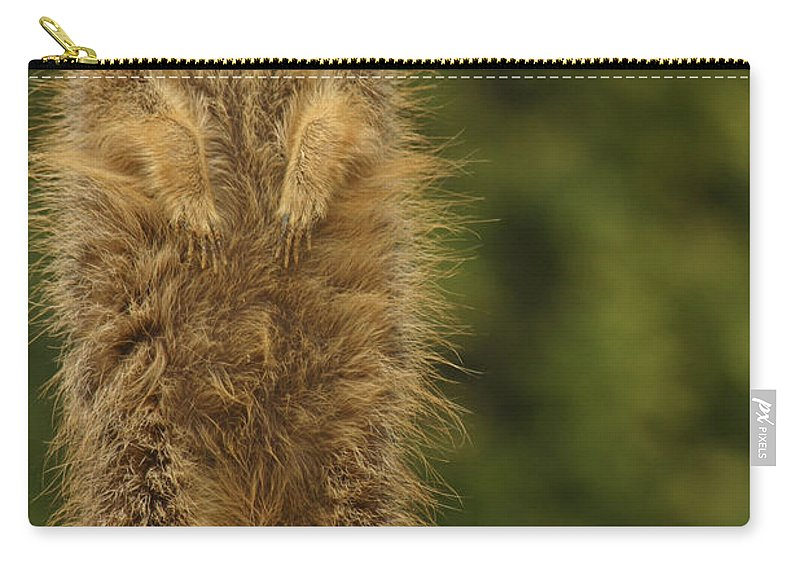 Meercat Carry-all Pouch featuring the photograph Meercat by Ian Middleton