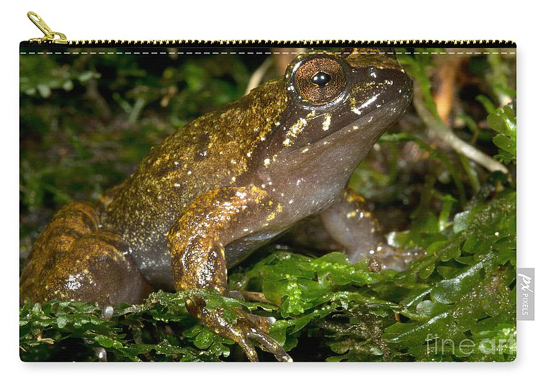 Mehu�n Green Frog Carry-all Pouch featuring the photograph Mehu�n Green Frog by Dant� Fenolio