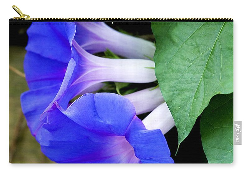 Morning Glory Carry-all Pouch featuring the photograph Morning Glory by Marilyn Hunt
