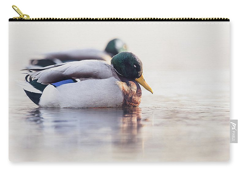 Bird Carry-all Pouch featuring the photograph Napping by Annette Bush