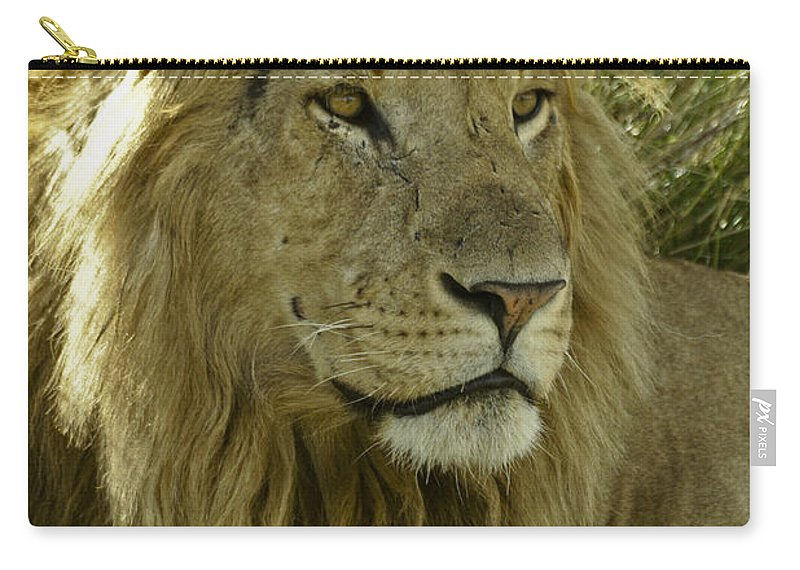 Lion Carry-all Pouch featuring the photograph Nice Kitty by Michele Burgess