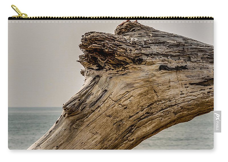 Emma Wood Carry-all Pouch featuring the photograph Gull On Driftwood by Patti Deters