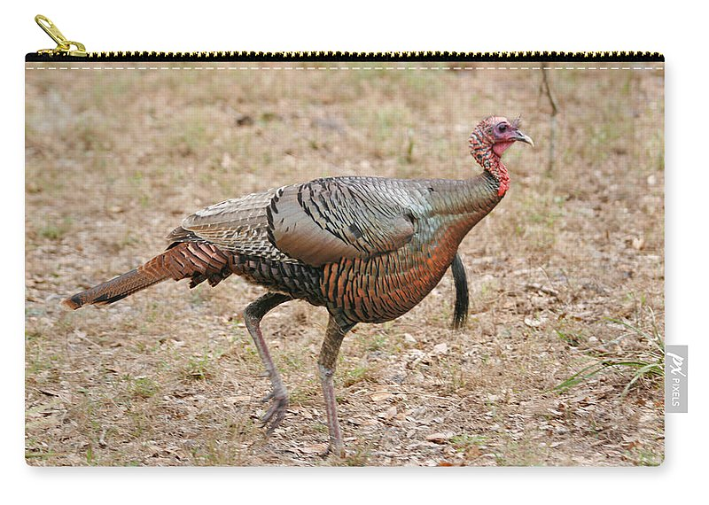 Animals Carry-all Pouch featuring the photograph Oceola Turkey by John Harmon