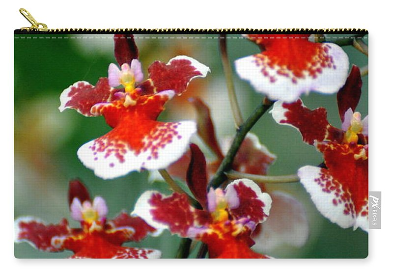 Orchid Carry-all Pouch featuring the photograph Orchid 34 by Marty Koch