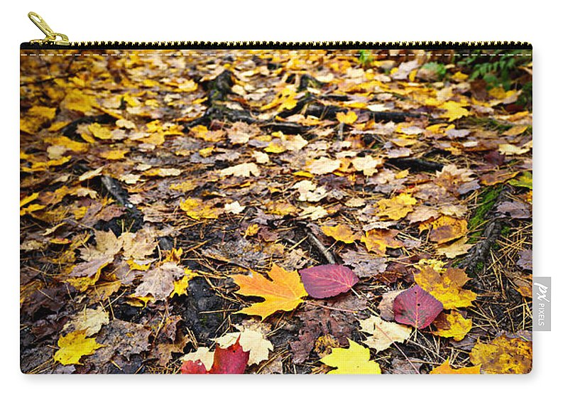 Autumn Carry-all Pouch featuring the photograph Path In Fall Forest by Elena Elisseeva