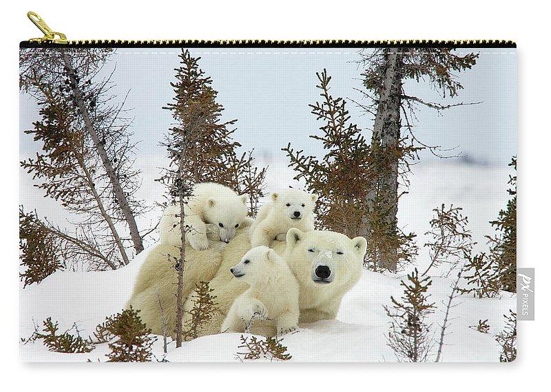 Mp Carry-all Pouch featuring the photograph Polar Bear Ursus Maritimus Trio by Matthias Breiter