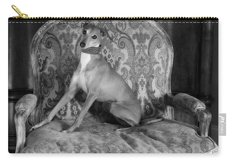 Editorial Carry-all Pouch featuring the photograph Portrait Of An Italian Greyhound In Black And White by Angela Rath