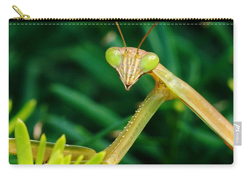 Praying Mantis Carry-all Pouch featuring the photograph Praying Mantis by George Mattei