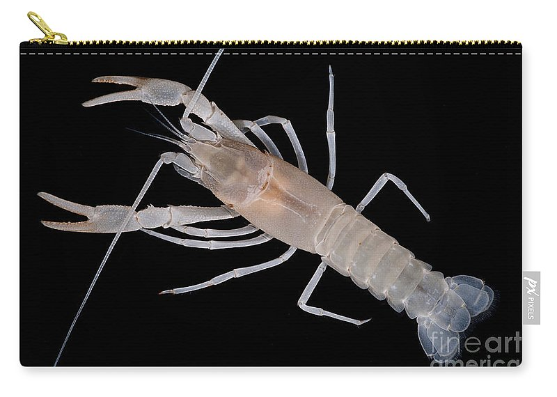 Cave Biology Carry-all Pouch featuring the photograph Prickly Cave Crayfish by Dant� Fenolio