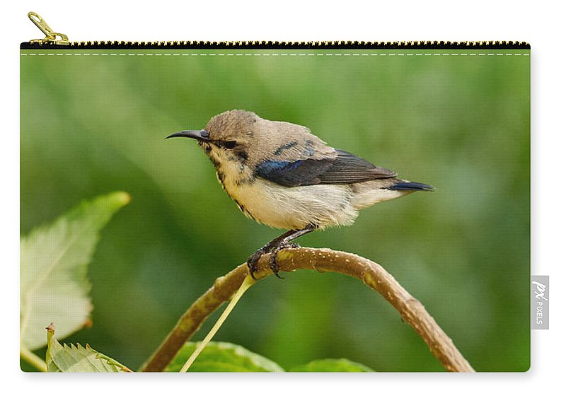 Jouko Lehto Carry-all Pouch featuring the photograph Purple Sunbird by Jouko Lehto