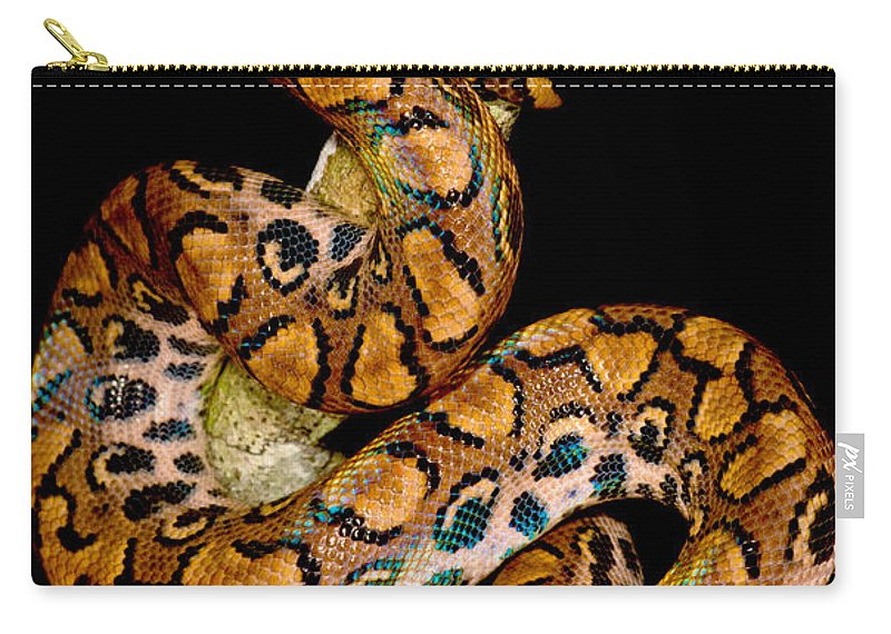 Animal Carry-all Pouch featuring the photograph Rainbow Boa by Dant� Fenolio