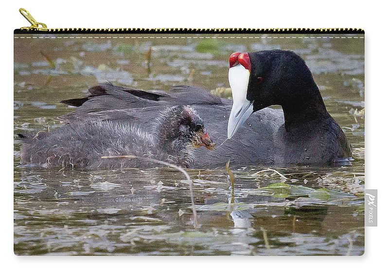 Gariep Carry-all Pouch featuring the photograph Red Knobbed Coot by Melanie Meyer