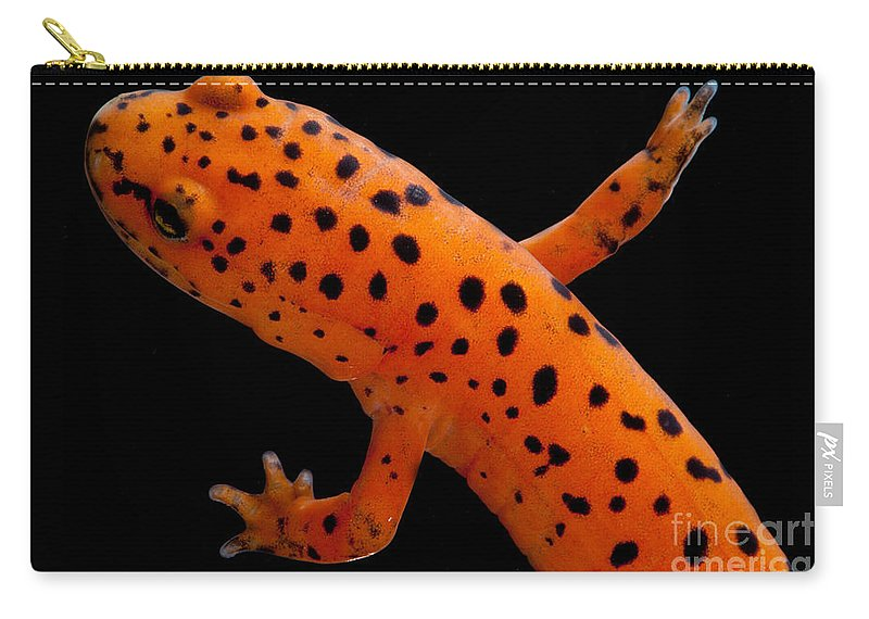 Plethodontidae Carry-all Pouch featuring the photograph Red Salamander by Dant� Fenolio