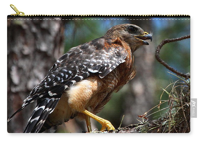 Red Shouldered Hawk Carry-all Pouch featuring the photograph Red Shouldered Hawk by Barbara Bowen