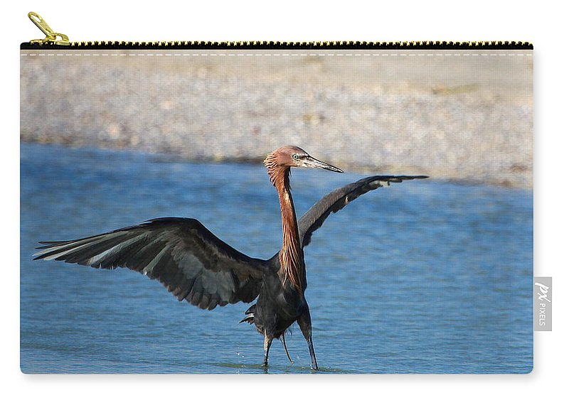 Reddish Egret Carry-all Pouch featuring the photograph Reddish Egret by Barbara Bowen