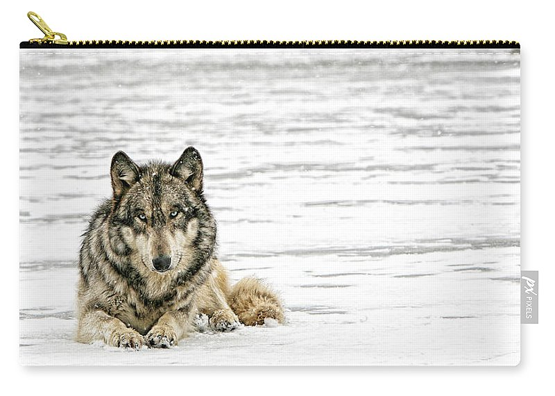 Wolf Carry-all Pouch featuring the photograph Relaxed by Shari Jardina
