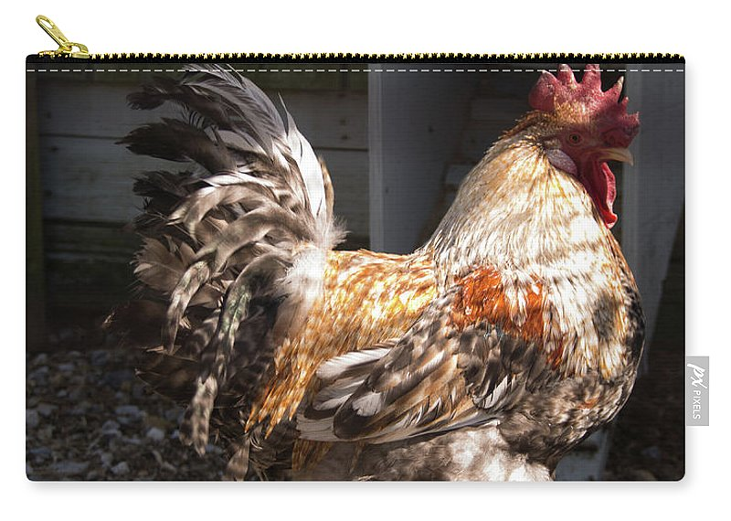 Rooster Carry-all Pouch featuring the photograph Rooster In A Coop by Diane Schuler