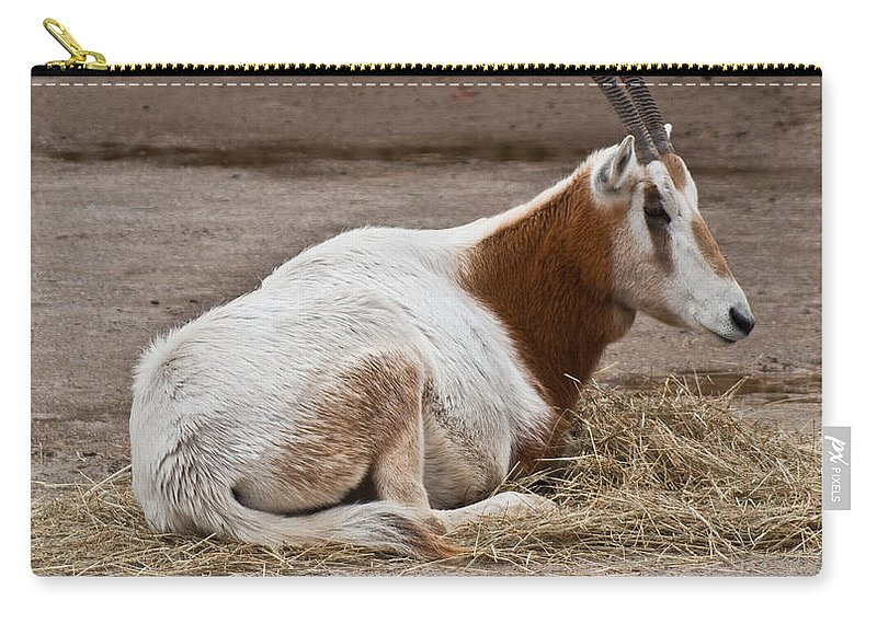 Scimitar Oryx Carry-all Pouch featuring the photograph Scimitar Horned Dammah by Douglas Barnett