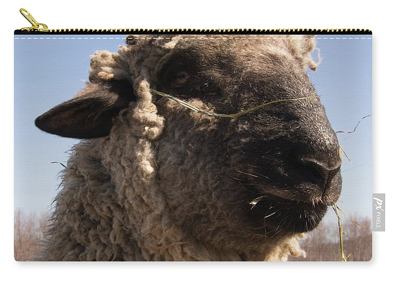 Sheep Carry-all Pouch featuring the photograph Sheep Face by Diane Schuler
