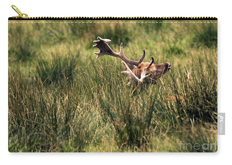 Fallow Deer Carry-all Pouch featuring the photograph Siesta by Angel Tarantella