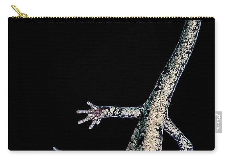 Plethodontidae Carry-all Pouch featuring the photograph Slimy Salamander by Dant� Fenolio