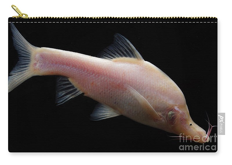 Small Eye Golden Line Barbel Carry-all Pouch featuring the photograph Small Eye Golden Line Barbel by Dant� Fenolio