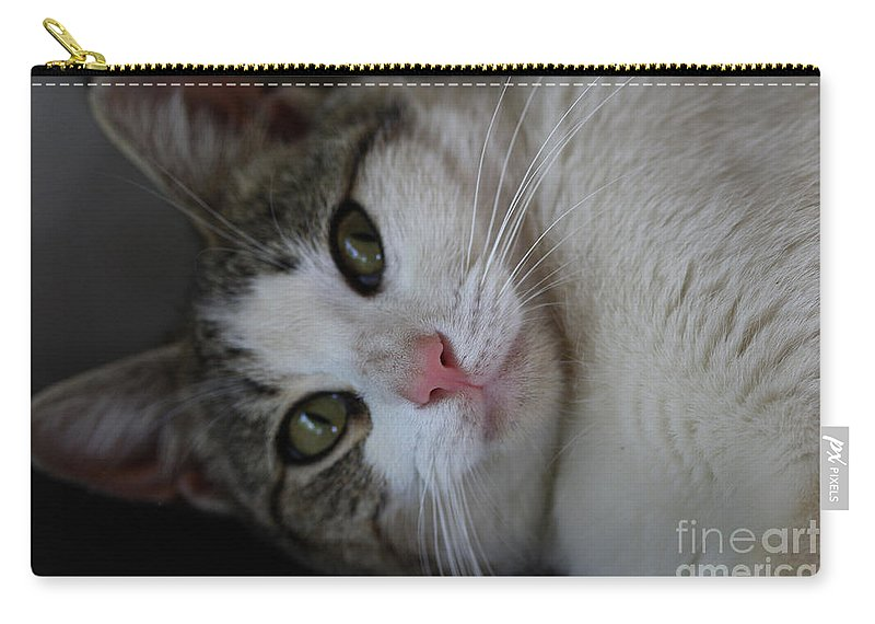Cats Carry-all Pouch featuring the photograph Soxx by Kim Henderson