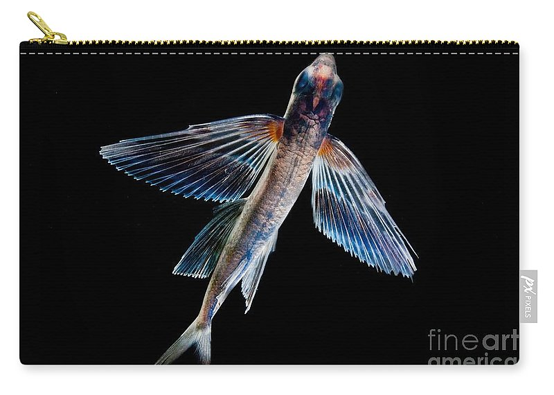 Spotfin Flyingfish Carry-all Pouch featuring the photograph Spotfin Flyingfish by Dant� Fenolio
