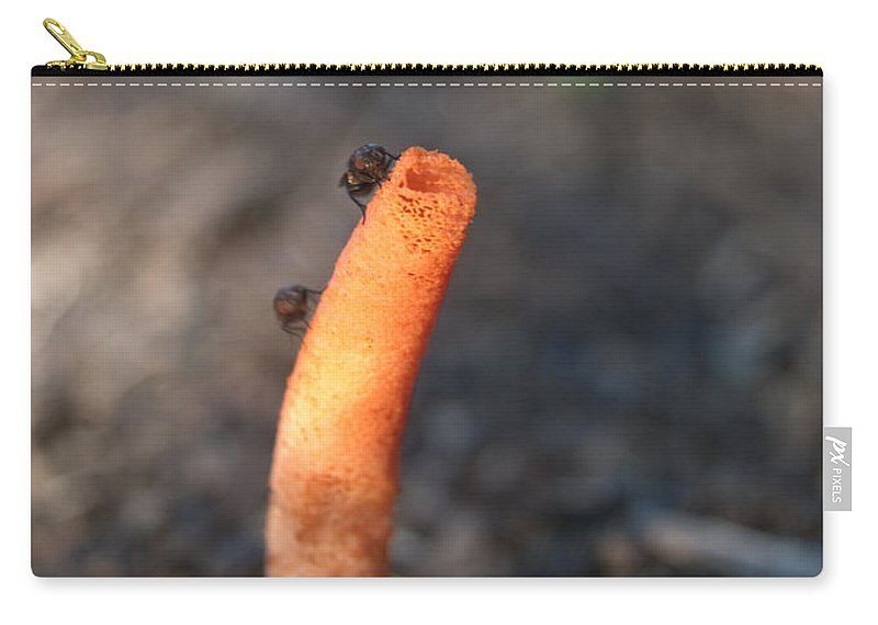 Stinkhorn Carry-all Pouch featuring the photograph Stinkhorn And Flies by Douglas Barnett