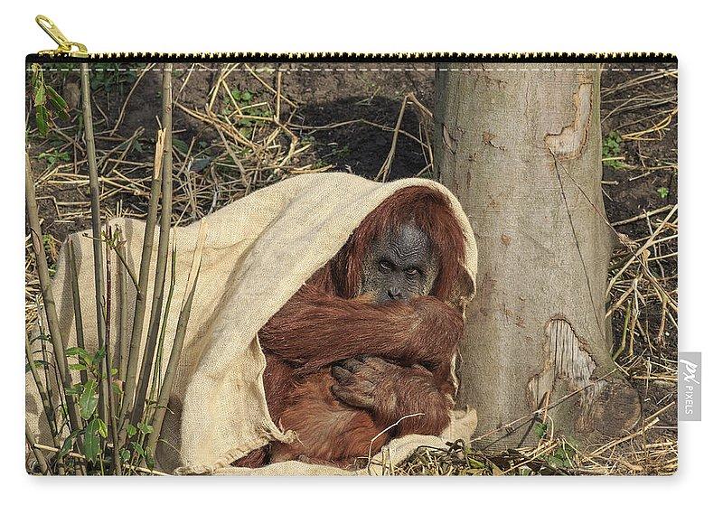 Orangutan Carry-all Pouch featuring the photograph Sumatran Orangutang - by Chris Smith