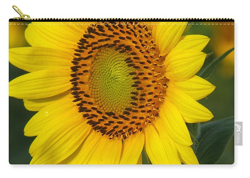 Sunflowers Carry-all Pouch featuring the photograph Sunflower by Amanda Barcon