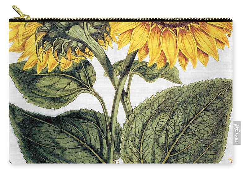 1777 Carry-all Pouch featuring the photograph Sunflower by Granger