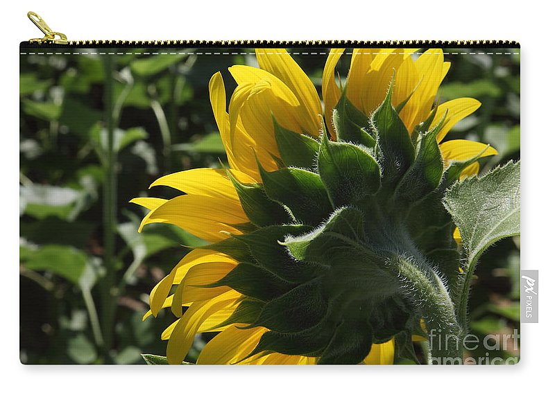 Sunflower Carry-all Pouch featuring the photograph Sunflower Series 09 by Amanda Barcon
