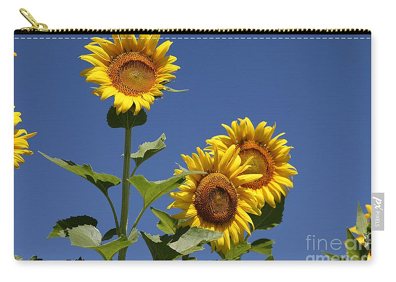 Sunflowers Carry-all Pouch featuring the photograph Sunflowers by Amanda Barcon