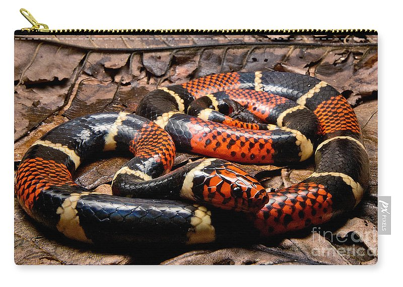 Surinam Coralsnake Carry-all Pouch featuring the photograph Surinam Coralsnake by Dant� Fenolio