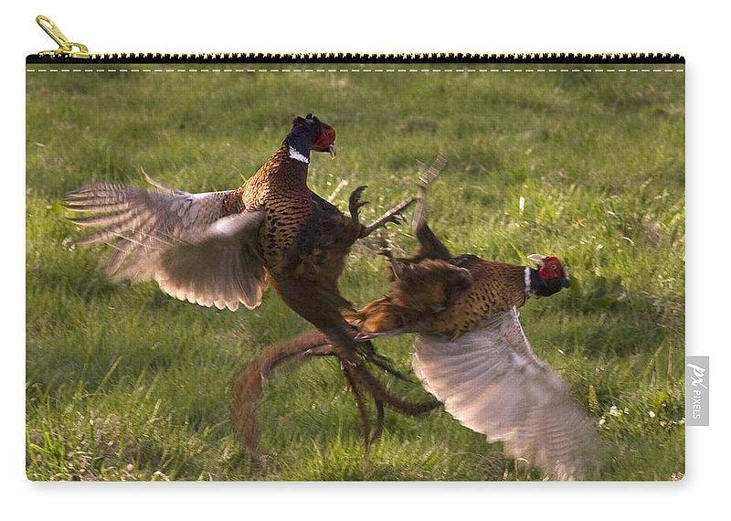 Pheasant Carry-all Pouch featuring the photograph The Sparring by Angel Ciesniarska