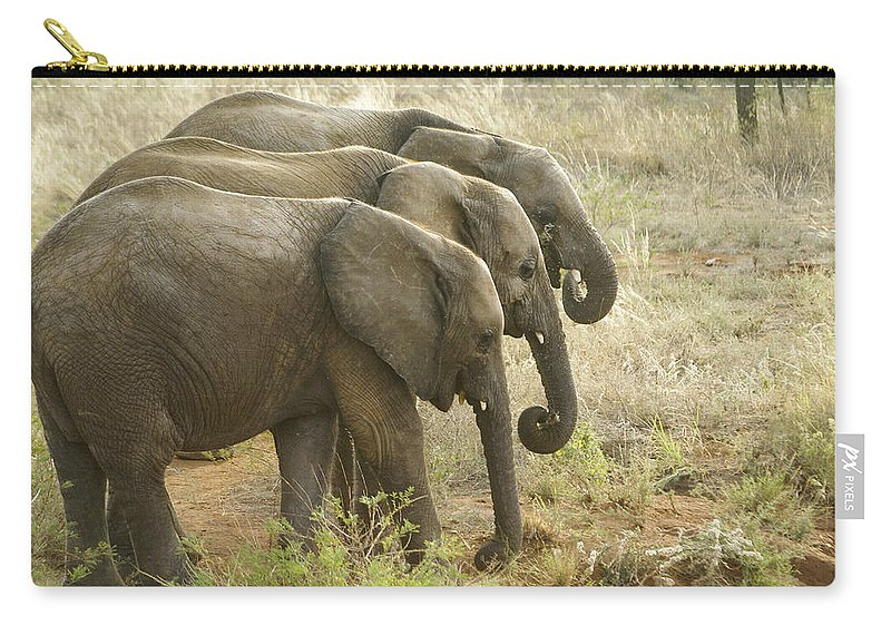 Africa Carry-all Pouch featuring the photograph Three In A Row by Michele Burgess