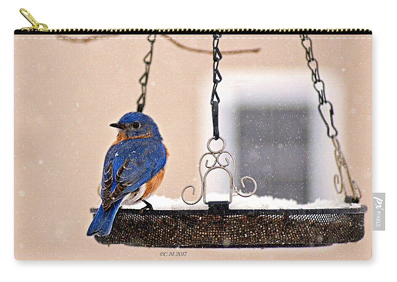 Bluebird Carry-all Pouch featuring the photograph Transfixed by Catherine Melvin
