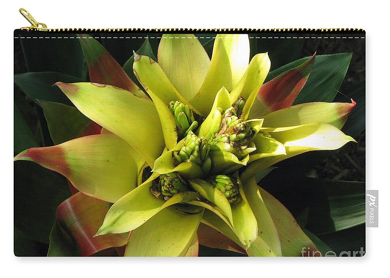 Tropical Carry-all Pouch featuring the photograph Tropical by Amanda Barcon