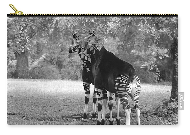 Animal Carry-all Pouch featuring the photograph Two Stripers by Rob Hans
