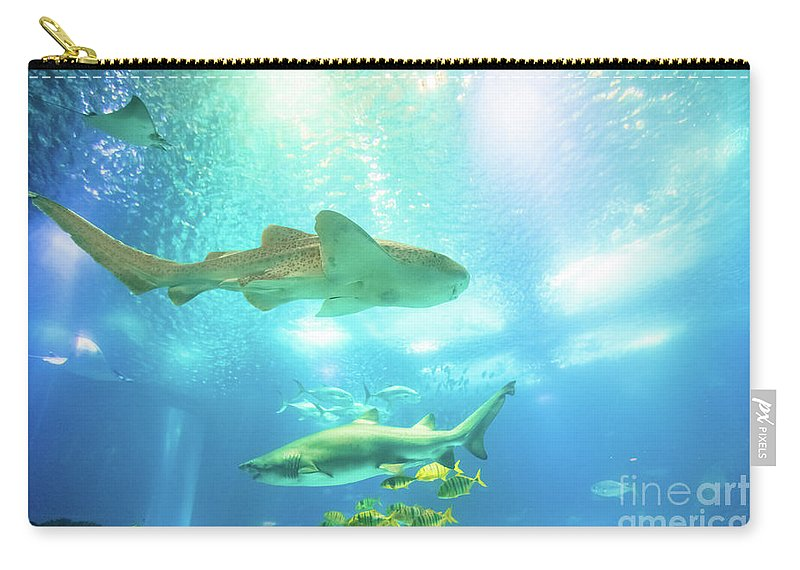 Underwater Carry-all Pouch featuring the photograph Undersea Shark Background by Benny Marty