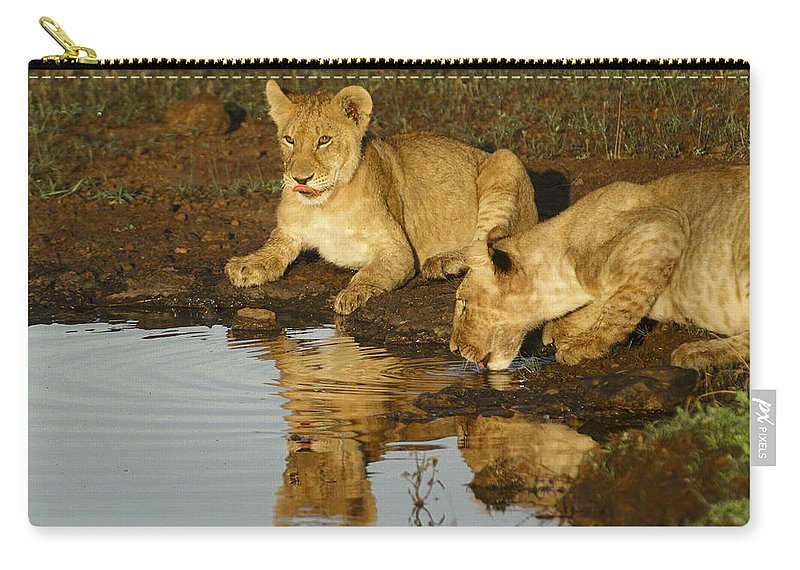 Lion Carry-all Pouch featuring the photograph We're Thirsty by Michele Burgess