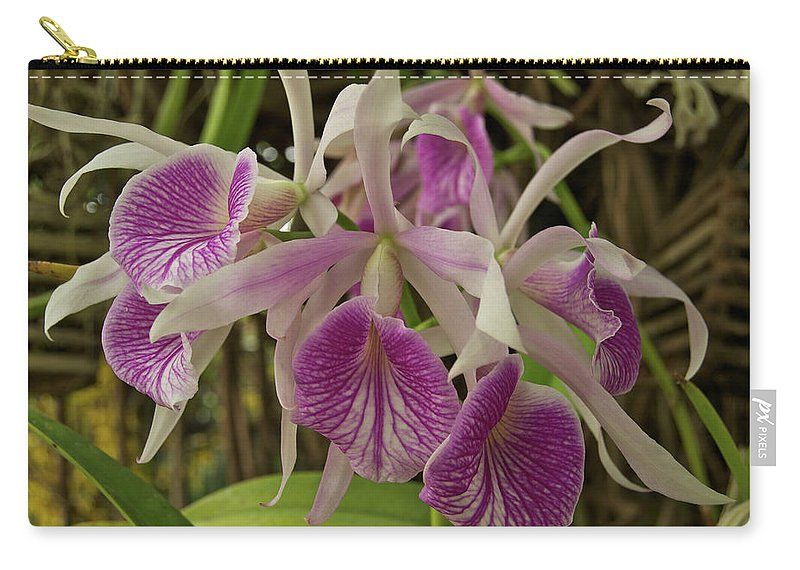 Orchids Carry-all Pouch featuring the photograph White And Purple Orchids by Michael Peychich