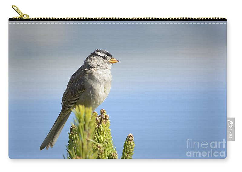 White-crowned Carry-all Pouch featuring the photograph White-crowned Sparrow by Marv Vandehey