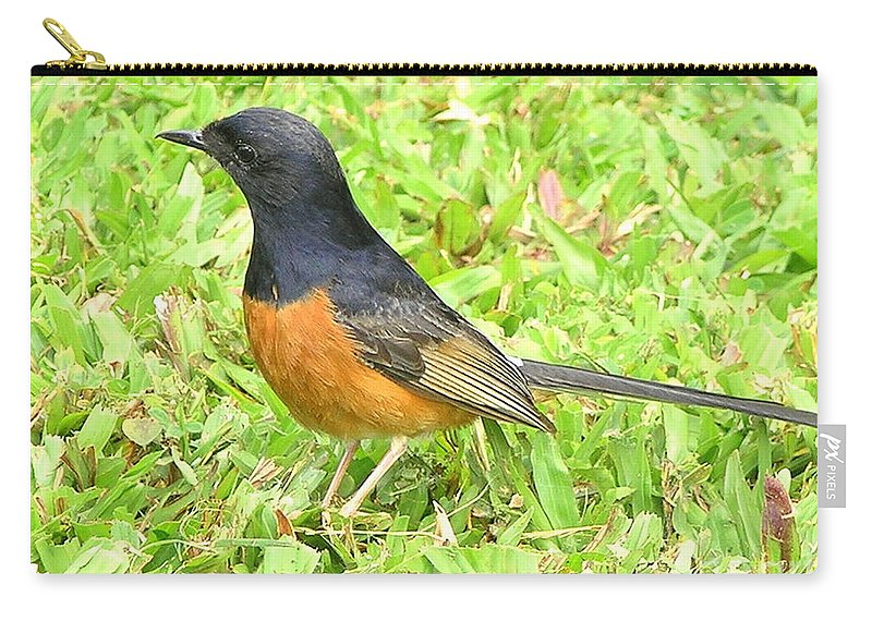 Black Carry-all Pouch featuring the photograph White-rumped Shama by Mary Deal